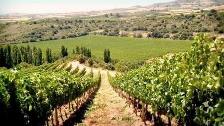 Img-secciones-vinicola